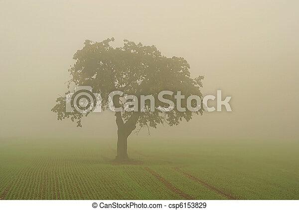 Árbol en niebla 01 - csp6153829