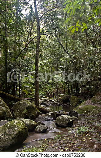 Bosque de lluvia - csp0753230