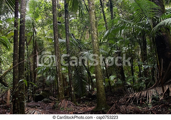 Bosque de lluvia - csp0753223