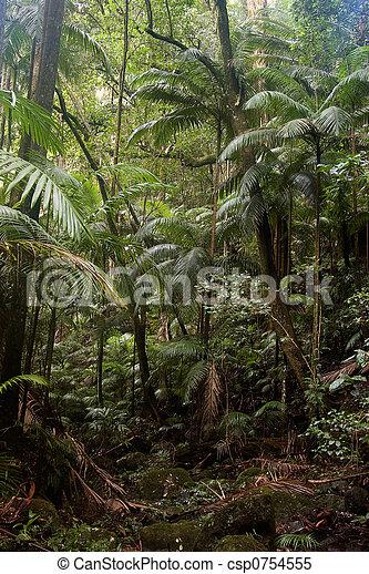 Bosque de lluvia - csp0754555