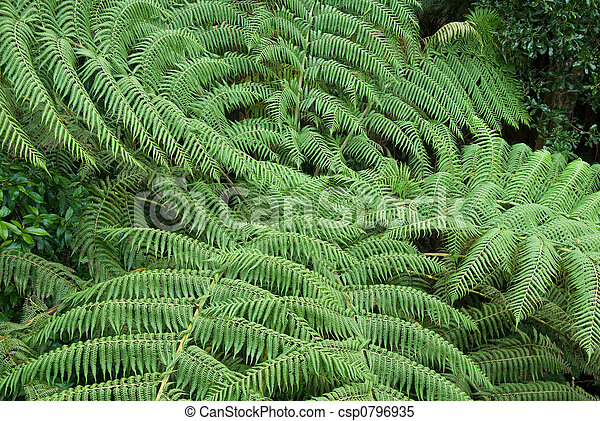 Bosque de lluvia - csp0796935