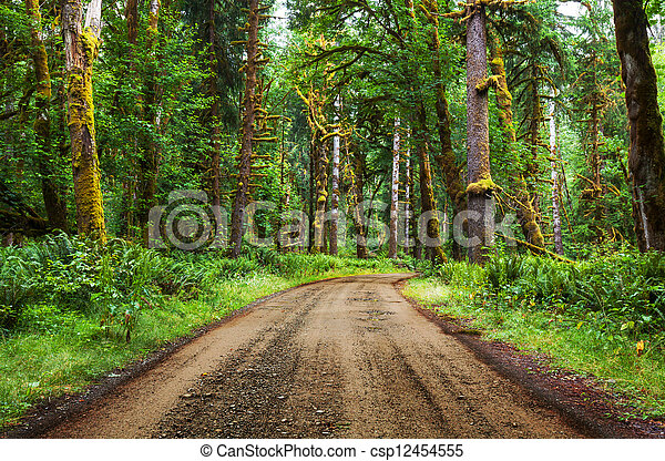 Bosque de lluvia - csp12454555
