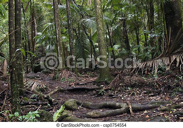 Bosque de lluvia - csp0754554