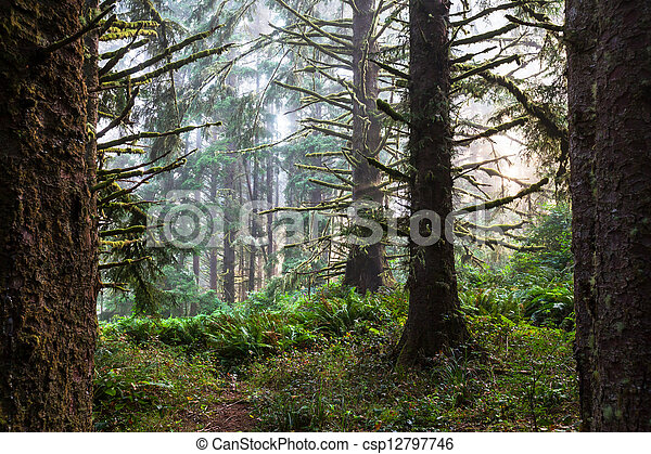 Bosque de lluvia - csp12797746
