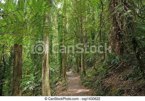 Bosque de lluvia - csp1430622