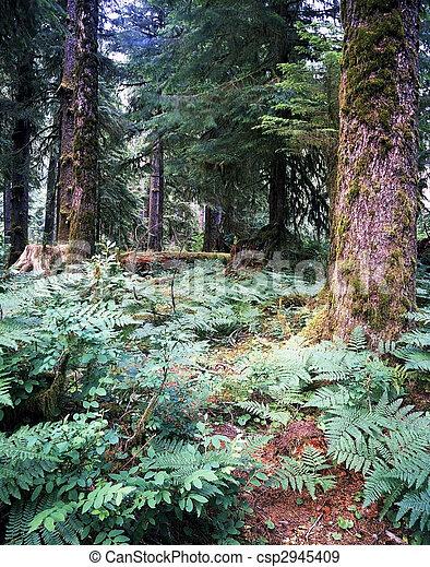 Bosque de lluvia - csp2945409