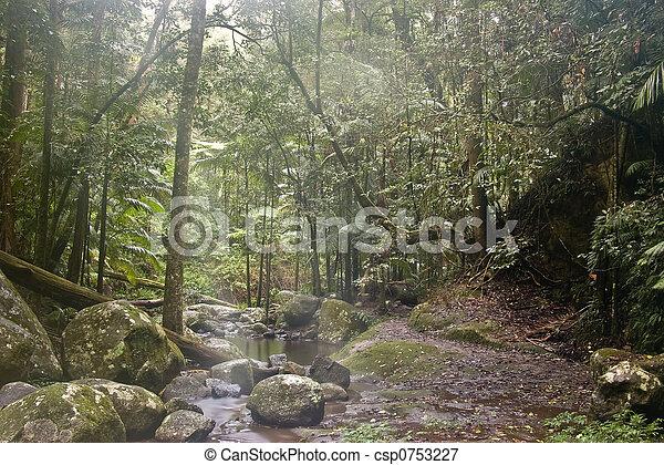 Bosque de lluvia - csp0753227