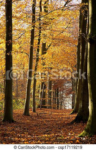 Bosque de otoño - 01 - csp17119219
