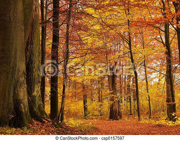 Bosque de otoño - csp0157597