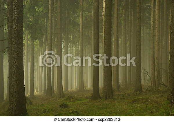 Bosque en la niebla 01 - csp2283813