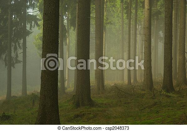 Bosque en niebla 02 - csp2048373