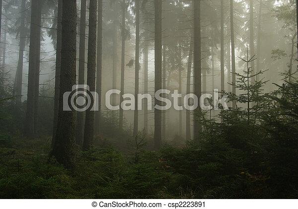 Bosque en niebla 14 - csp2223891