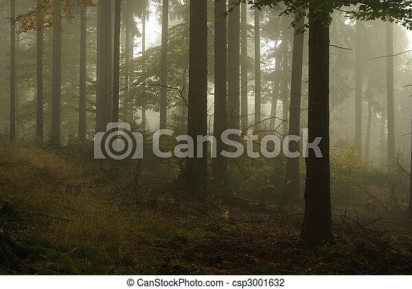 Bosque en niebla 15 - csp3001632