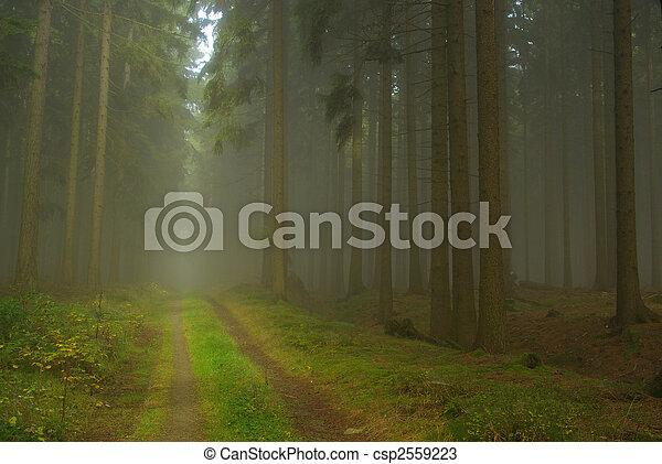 Bosque en niebla 21 - csp2559223