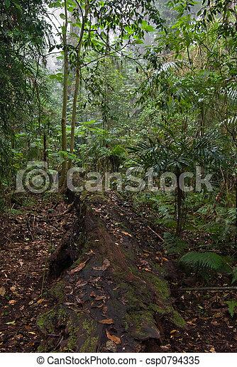Bosque lluvioso - csp0794335