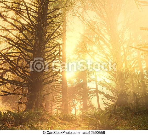 Bosque lluvioso - csp12590556