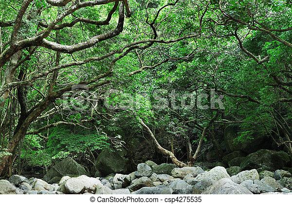 Bosque lluvioso - csp4275535