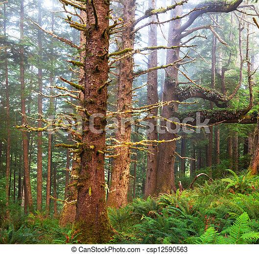 Bosque lluvioso - csp12590563