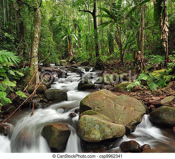 Bosque lluvioso - csp9962341