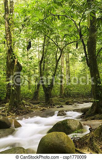 Bosque verde y río - csp1770009