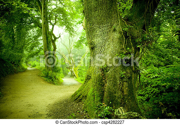 Camino del bosque - csp4282227