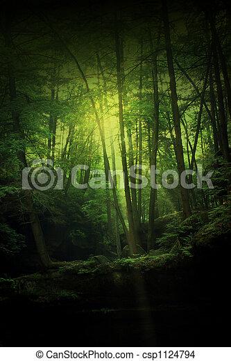 El bosque de fantasía - csp1124794