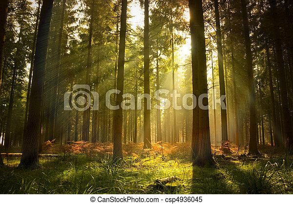 Hermoso bosque - csp4936045
