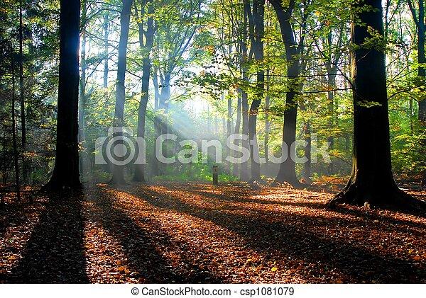 Los rayos del sol vierten en un bosque de otoño - csp1081079