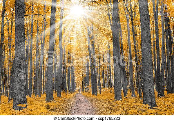 Naturaleza. Bosque en otoño - csp1765223